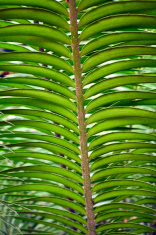 Huge tropical leaf