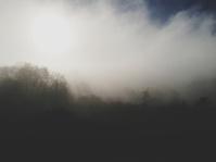 Fogged Trees
