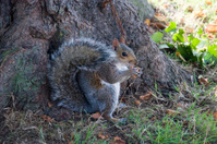 Squirrel at base of tree