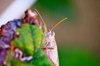 Hiding Cricket