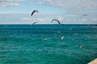 Sea Gulls Flying Away