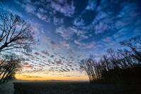 Winter Sunrise on Fields