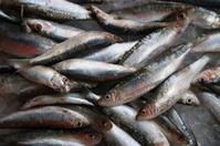 Venice: Sardines