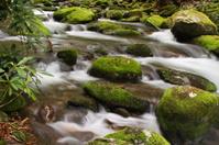 Green Moss Mountain Stream Smoky Mountains Tennessee