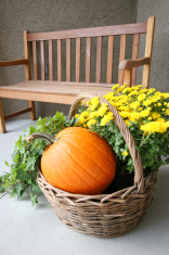 Pumpkin basket and bench