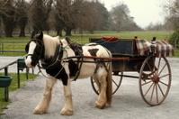 Irish horse with cart