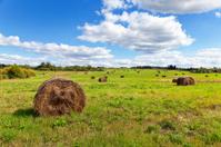 Hay on field under blue sky in summer day