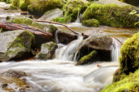 creek in the Black Forest / Germany