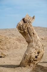 Dead tree trunk in the Gobi Desert