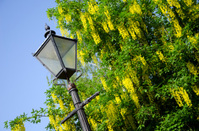 Old Fashioned Street Lamp in City of Chester