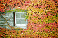 Fall foliage around stone window