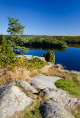 September in Swedish nature