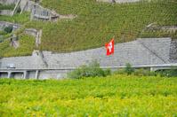 Swiss flag in Aigle vineyard