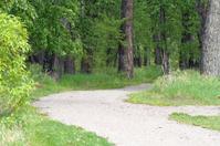 Pathway in Fish Creek Park