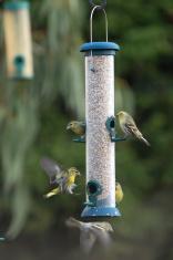 Siskin on a Bird Feeder