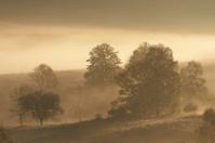 Sunrise with the fog