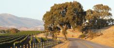 Winding Road and Vineyard
