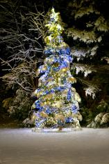 Christmas tree - 2011 outside