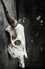 grunge bull skull