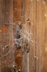 Wooden door covered in cobwebs