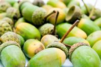 Green acorns background