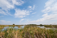 Discovery Marsh