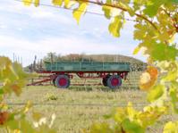 Guntramsorf, Lower Austria:  Vineyard in the  fall time