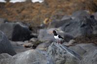 sea bird on rock