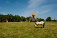 Horses graze in a farm