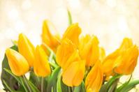 Yellow tulips on twinkled illuminated background