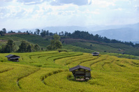 Rice terraced on mountain.
