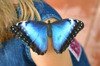 Denim Butterfly Blue