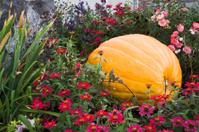 Hidden Pumpkin in Flowered