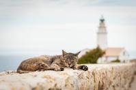 Straycat at Faro De Capdepera
