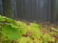 fall foggy day one