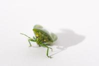 waving bug