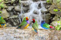 Exotic Birds Enjoying the Water