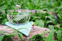Basket with Ramson leaf and flower
