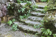 Ruined Stone Staircase