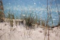 Beach Scene Cape San Blas