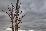 Gloomy Dead Trees