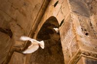 Crete - Bird in the Gorys temple