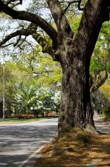 Oak on Abercorn Avenue