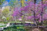 Park on Massachusetts Avenue, Washington DC