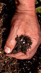 man's hand grabbing a handful of soil
