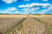 Field of rye under a great cloudscape