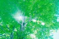 Ray Through Beech Trees