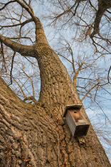 birdhouse aviary volery