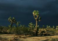 High Desert Yucca Valley