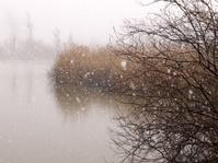 Lake under the snowfall